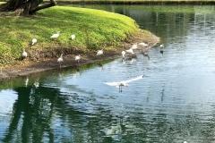 IMG_9049-birds