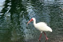 IMG_9051-whitebird